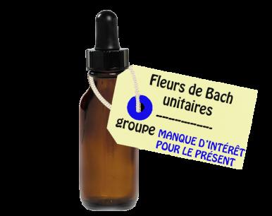 """Fleurs de Bach unitaires - """"MANQUE D'INTÉRÊT POUR LE PRÉSENT"""""""